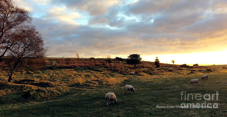 Hall Photograph - Sunset And Sheep by Merice Ewart