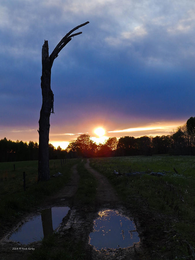 Sunset Photograph - Sunset And The Dead Tree by Nick Kirby