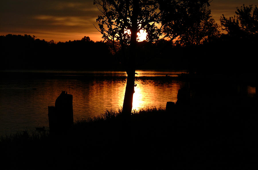 Sunset Photograph - Sunset And Tree by T F McDonald