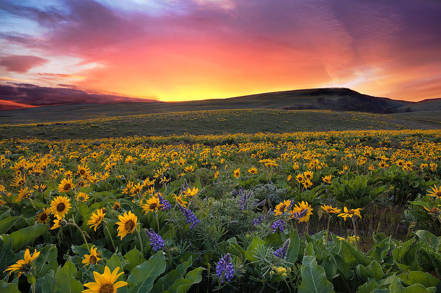 Sunset Photograph - Sunset at Columbia Hills State Park by David Gn
