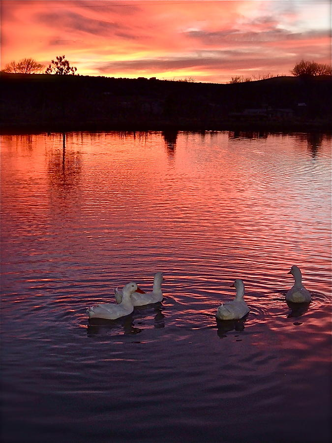 Sunset at Duckpond by Kim Pippinger