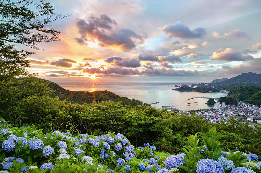 Sunset At Hydrangea Hills Photograph by Tommy Tsutsui