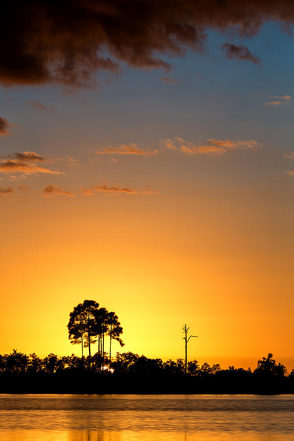 Backlit Photograph - Sunset At Long Pine Key Vertical by Andres Leon