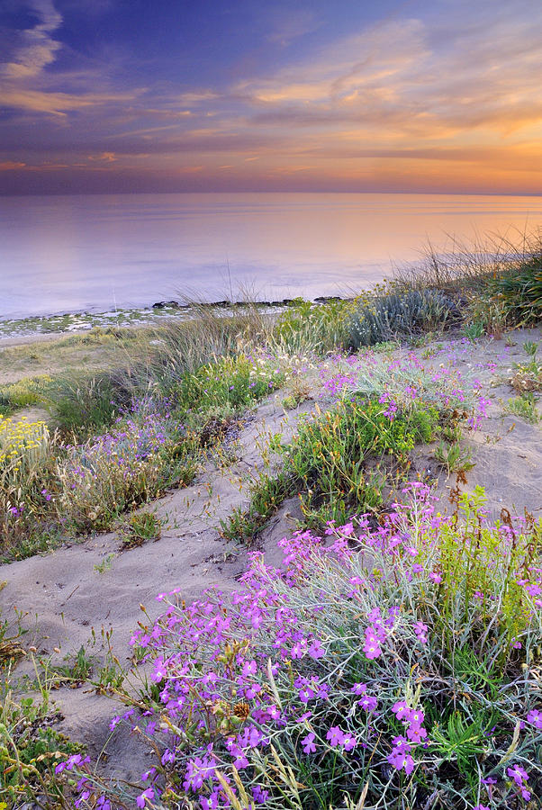 Seascape Photograph - Sunset At The Beach  Flowers On The Sand by Guido Montanes Castillo