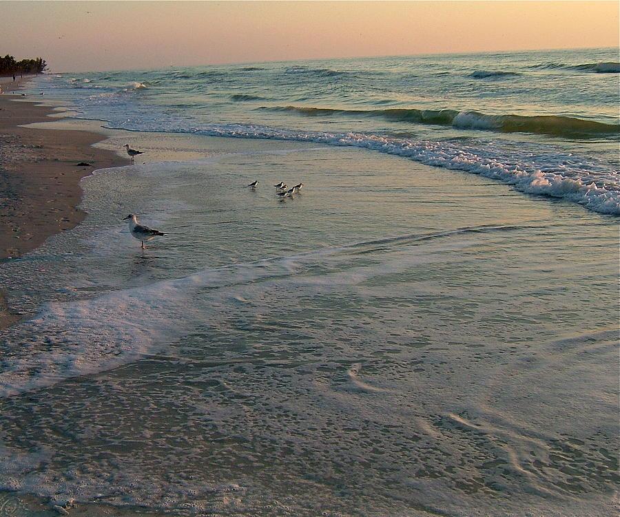 Birds Photograph - Sunset Bird Patrol by Susan Wyman