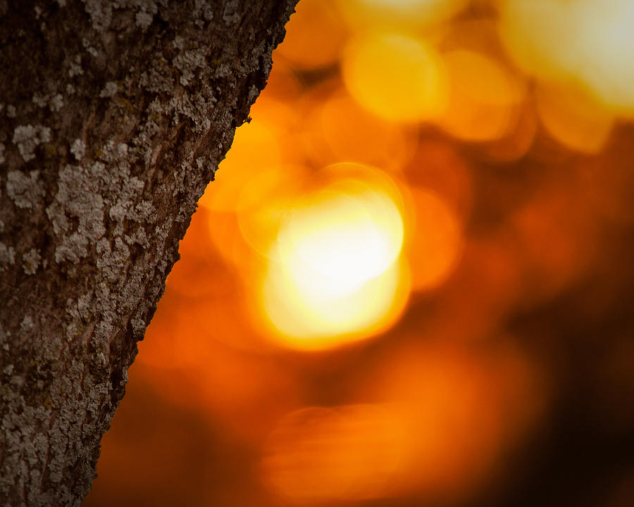 Sunset Bokeh Photograph