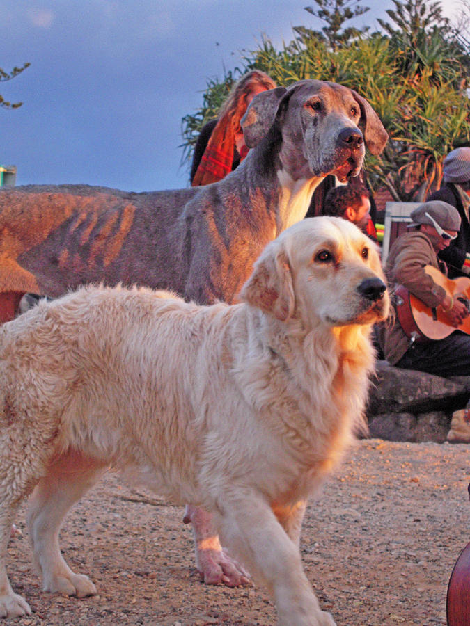 Australian Photograph - Sunset Dog Dreaming by Ankya Klay