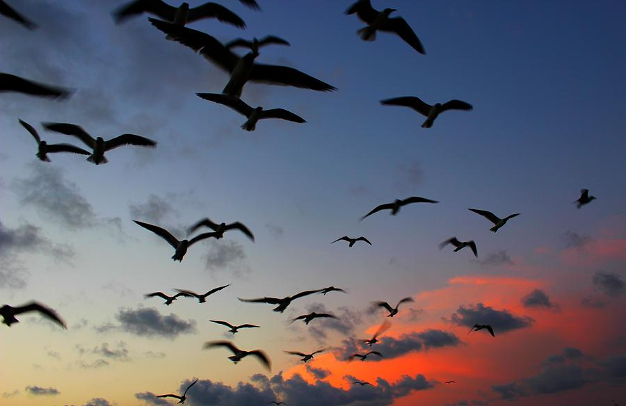 Sunset Photograph - Sunset Flight by Candice Trimble