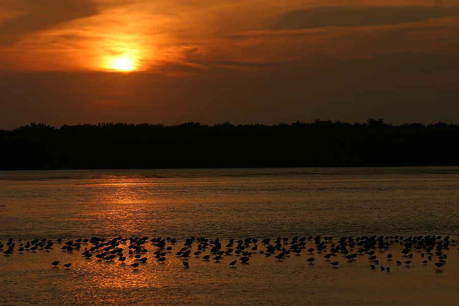 Sunset Photograph - Sunset Flock by Mark Russell