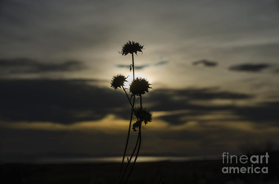Sunset Photograph - Sunset Flower by Nicole Markmann Nelson