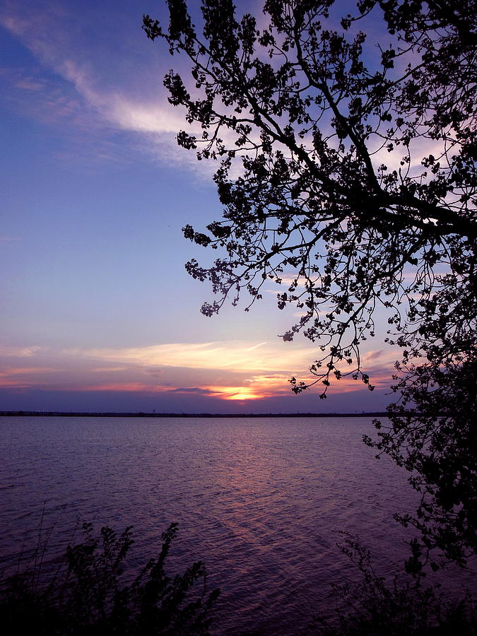 Sunset Photograph - Sunset From The Trees by Virginia Forbes