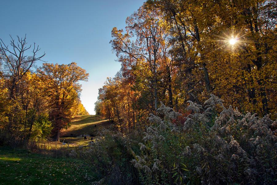 Fall Photograph - Sunset Graze by Jeanne Sheridan
