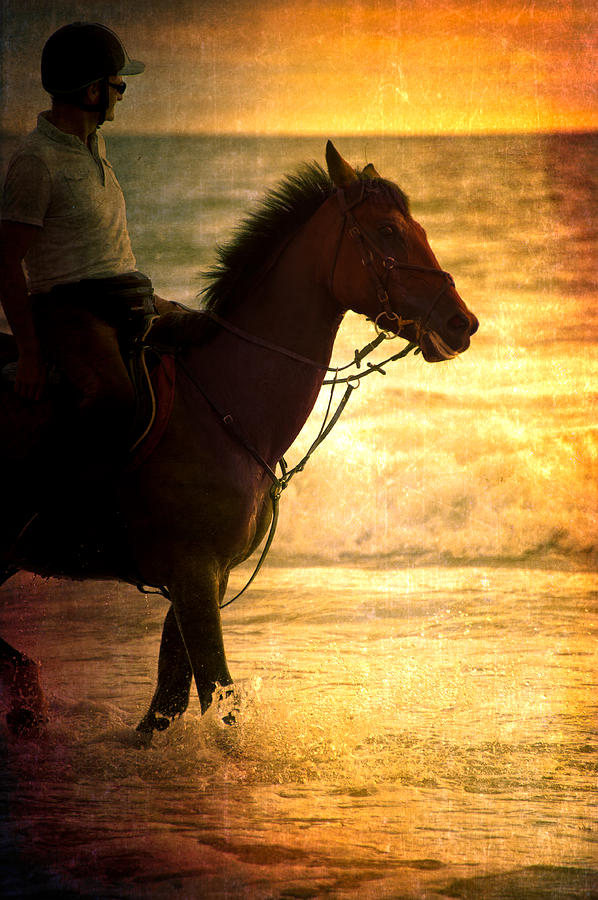 Loriental Photograph - Sunset Horse by Loriental Photography