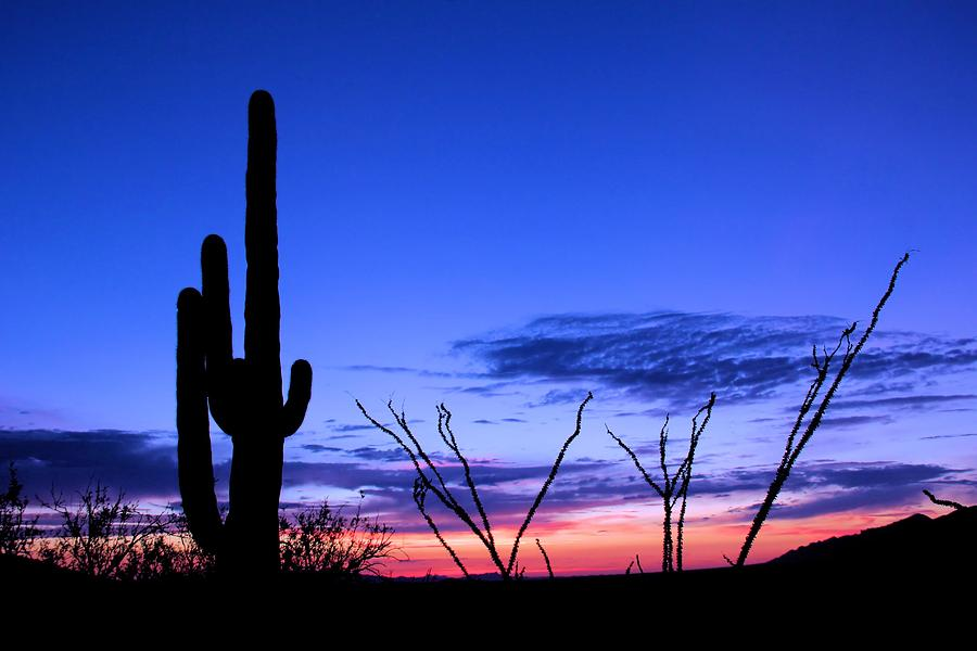 Cactus Photograph - Sunset In Saguaro National Park by Elizabeth Budd