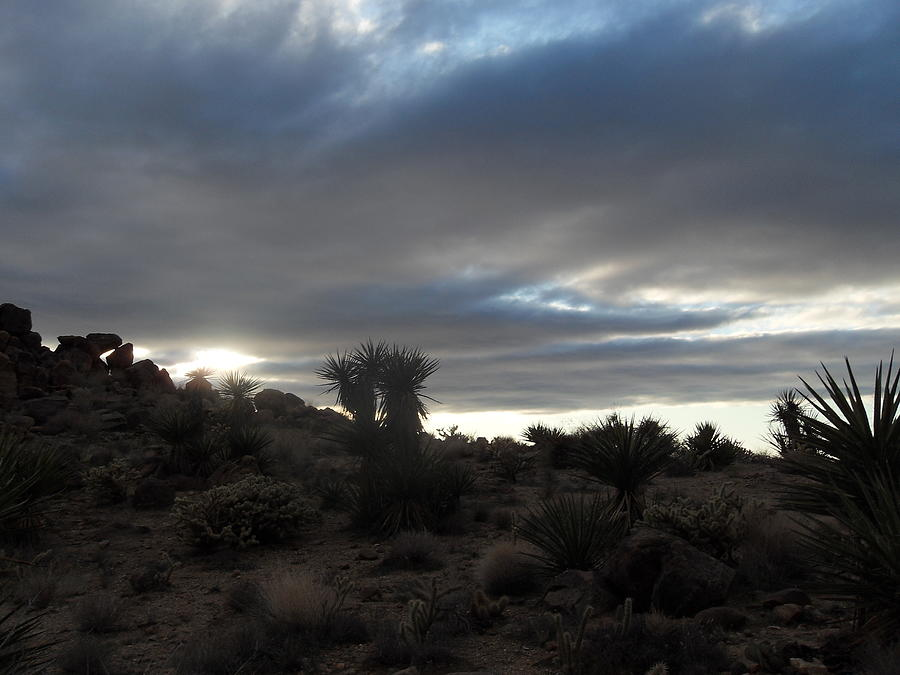 Landscape Photograph - Sunset In The Desert by James Welch