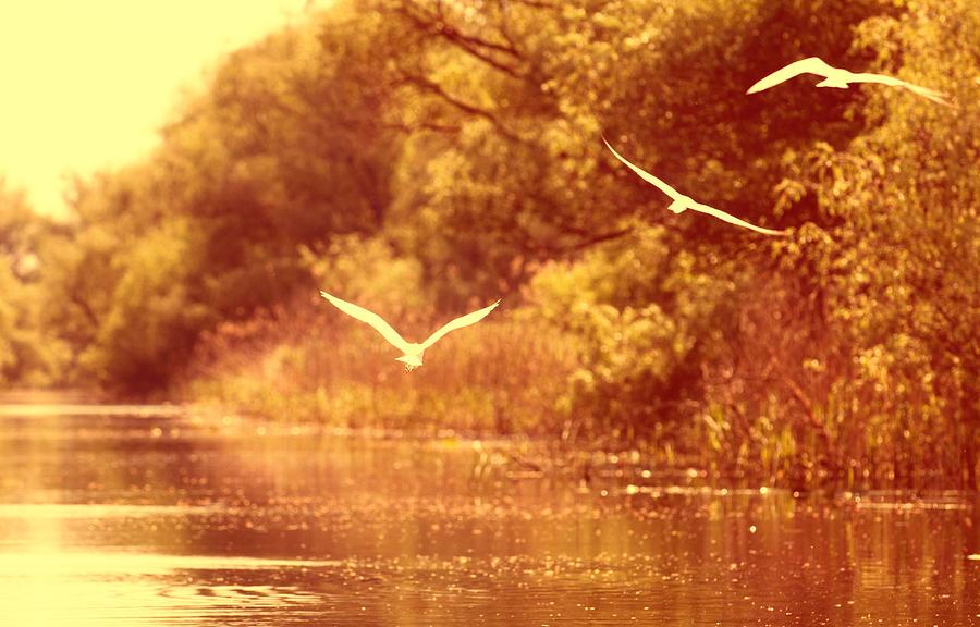 Bird Photograph - Sunset Lovers by Vessela Banzourkova