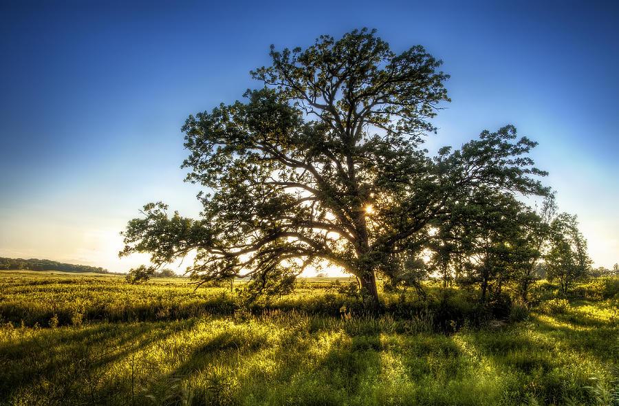Sunset Photograph - Sunset Oak by Scott Norris