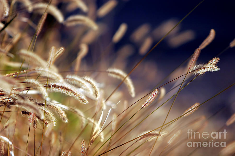 Green Photograph - Sunset On Autumn Grass by Lincoln Rogers