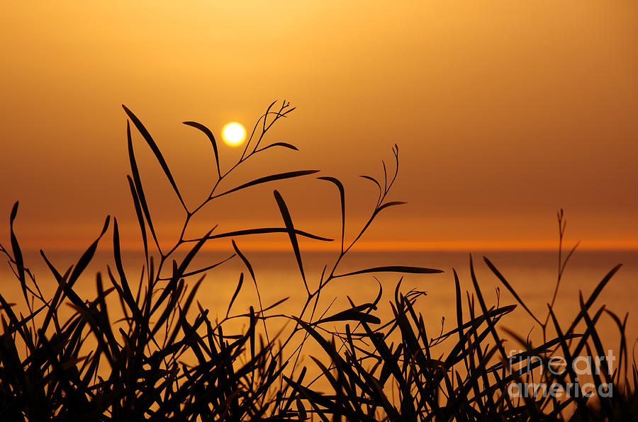 Backdrop Photograph - Sunset On Leaves  by Carlos Caetano