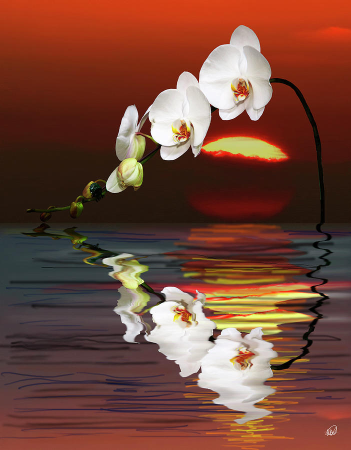 Orchid Painting - Sunset Orchids by Angela A Stanton