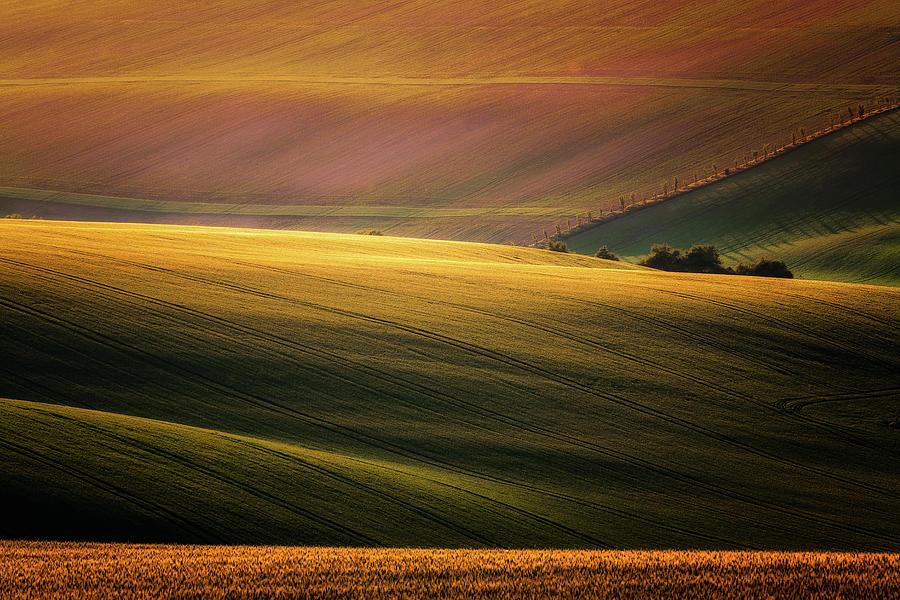 Fields Photograph - Sunset Palette by Marek Boguszak