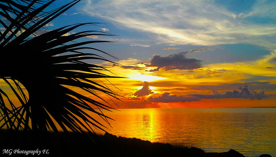 Sunset Photograph - Sunset Palm by Marty Gayler