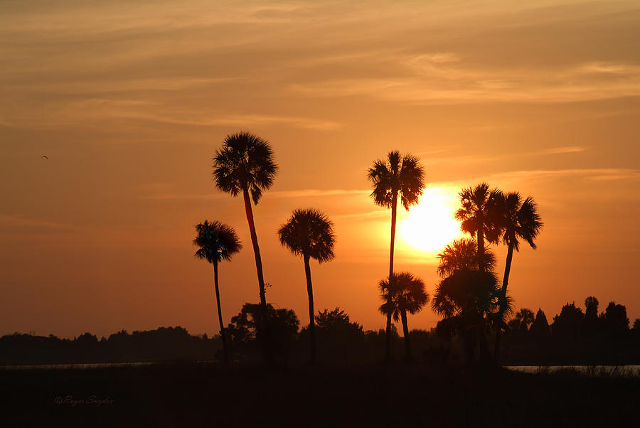 Beautiful Photograph - Sunset Palms 1 by Roger Snyder