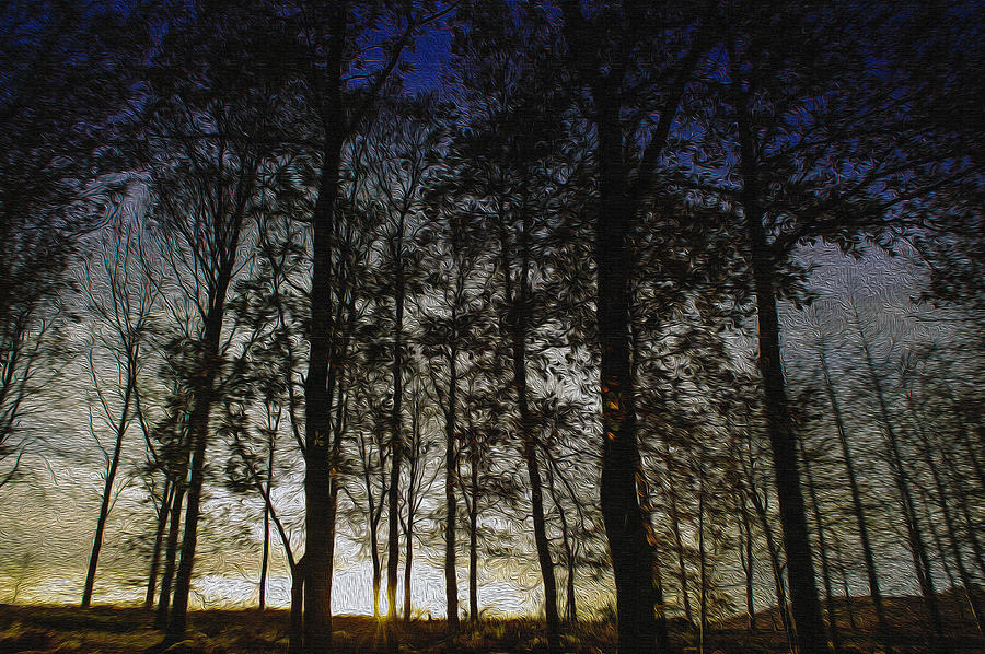 Forest Photograph - Sunset by Paul Dale