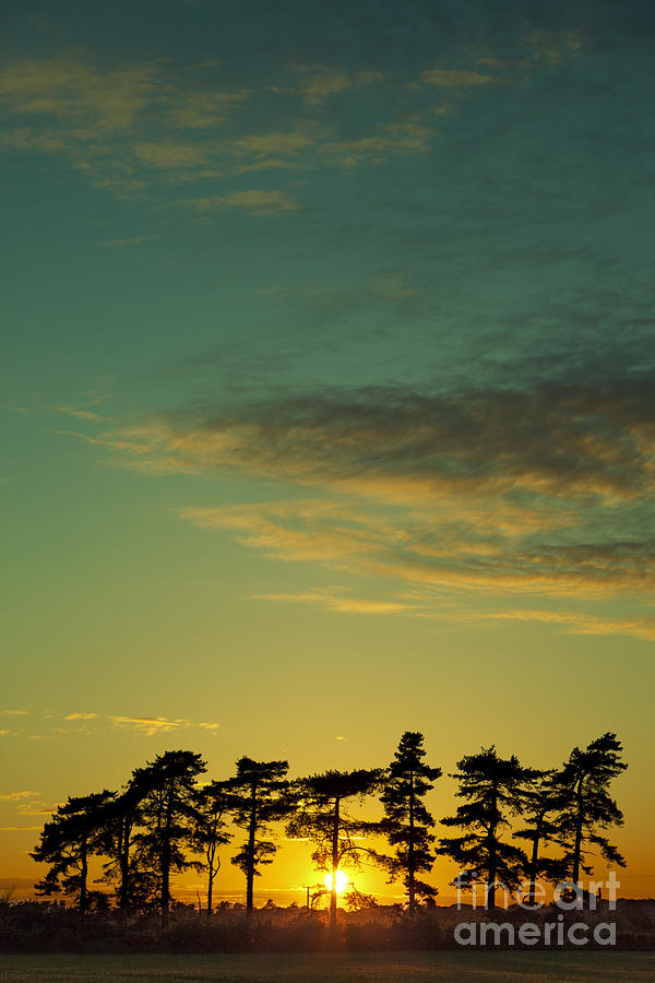 Sunset Pines Photograph - Sunset Pines by Paul Grand