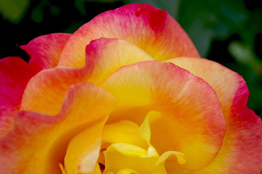 Rio Samba Photograph - Sunset Rose At Dawn by Christine Burdine