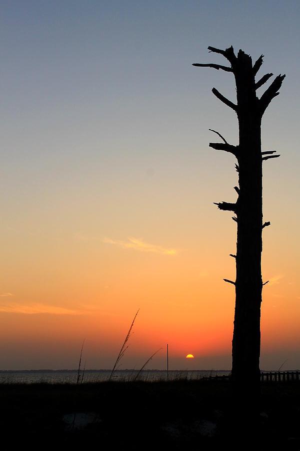 Florida Photograph - Sunset Silhouette by Saya Studios
