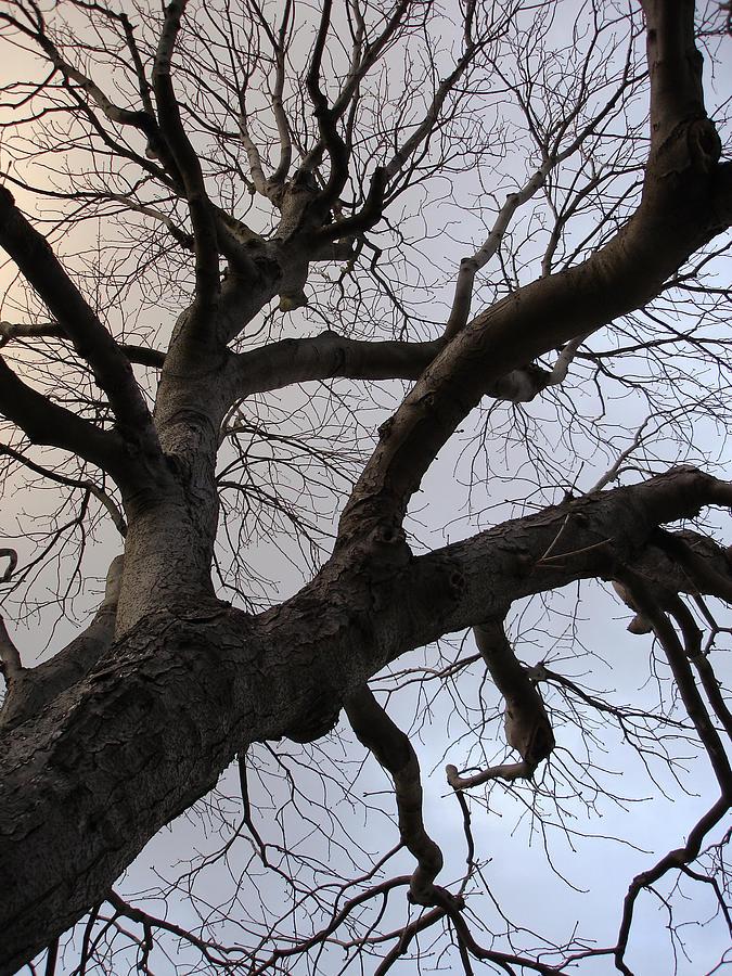 Landscape Photograph - Sunset Skeleton Tree by Michel Mata