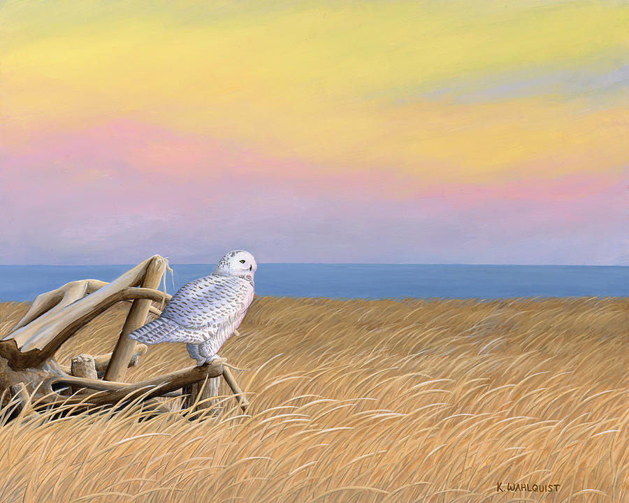 Snowy Owl Painting - Sunset Snowy Owl by Kirsten Wahlquist