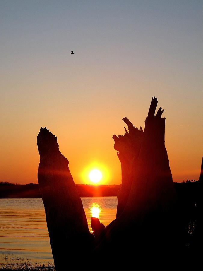 Sunset Stump Photograph