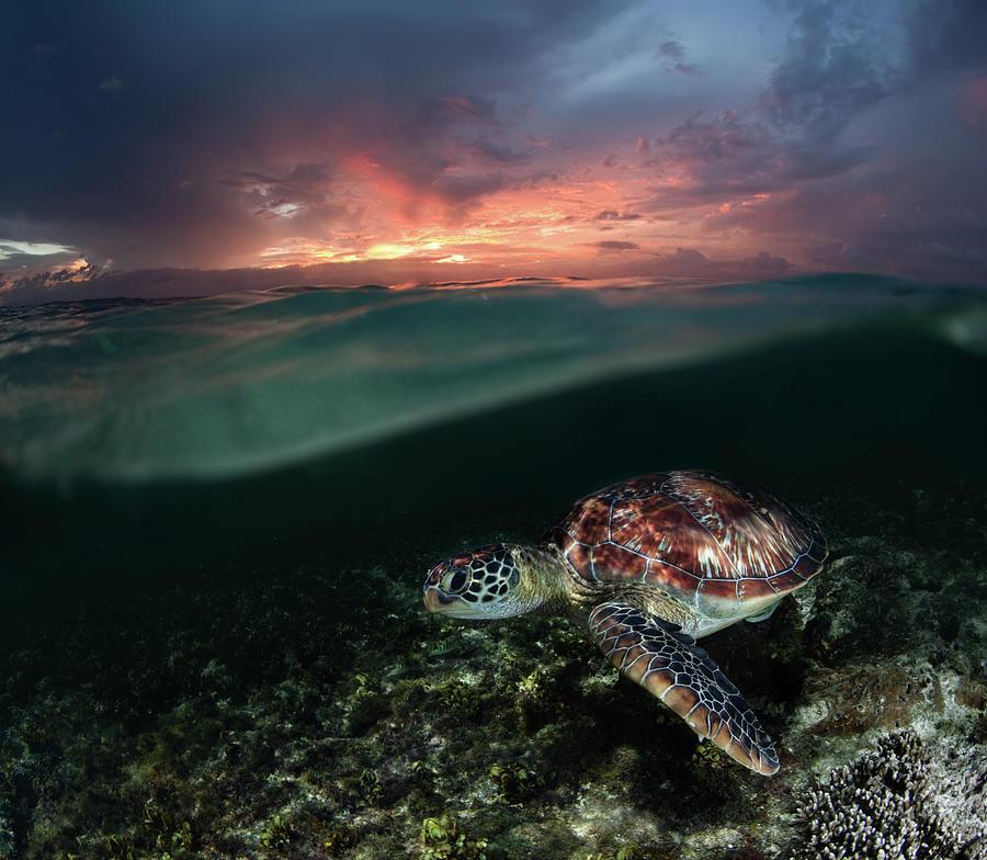 Sea Photograph - Sunset Swim by Andrey Narchuk