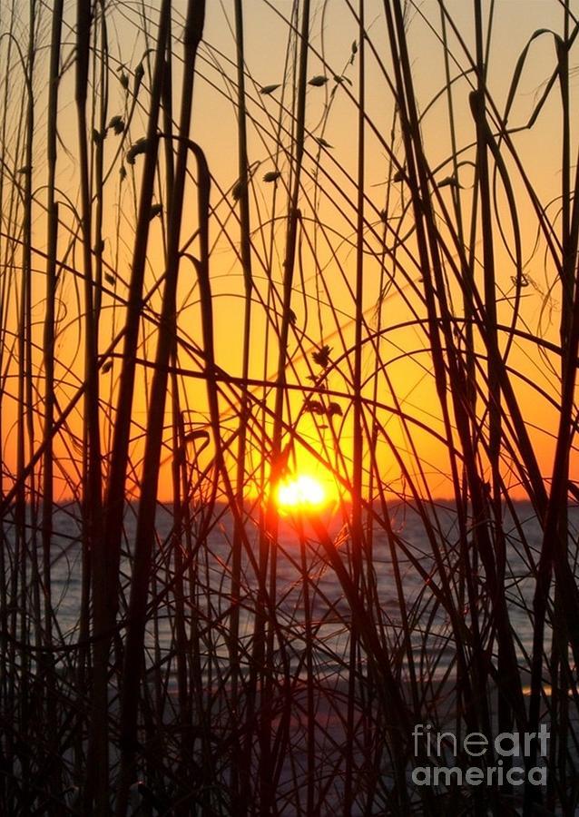Sunset Photograph - Sunset Through Grasses by Barbie Corbett-Newmin