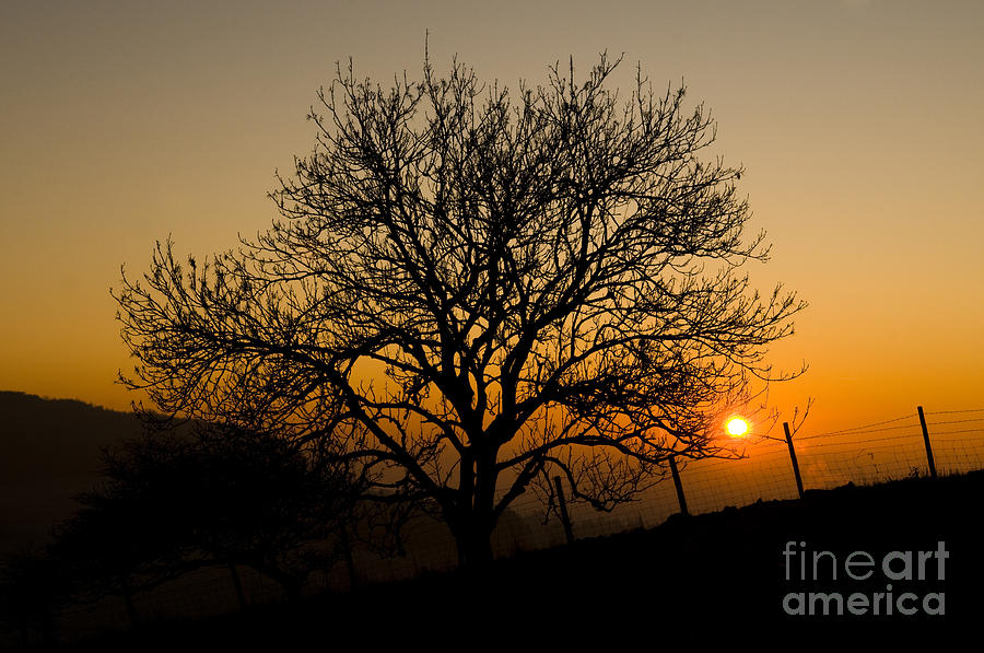 2010 Photograph - Sunset Tree by Anne Gilbert