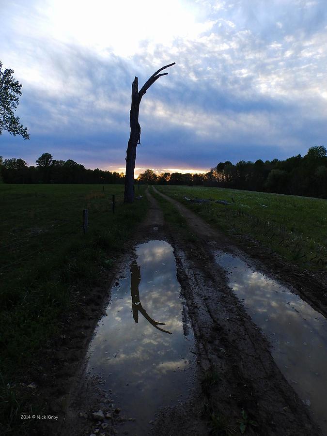 Tree Photograph - Sunset Treeflection by Nick Kirby