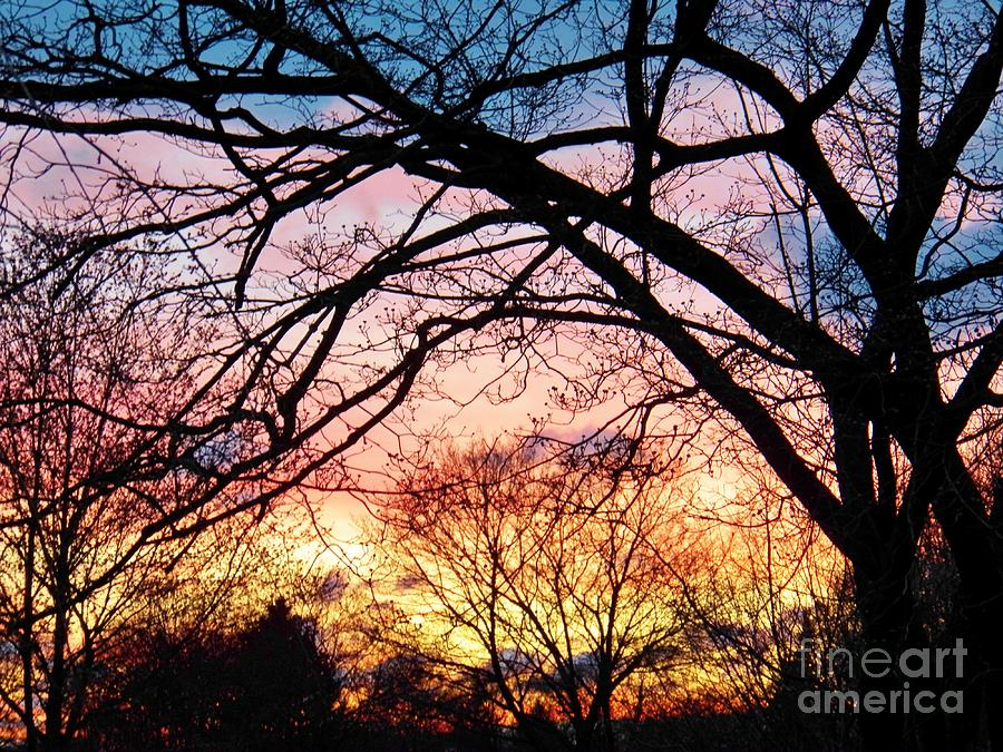 Spring Painting - Sunset Under The Dogwoods by Judy Via-Wolff