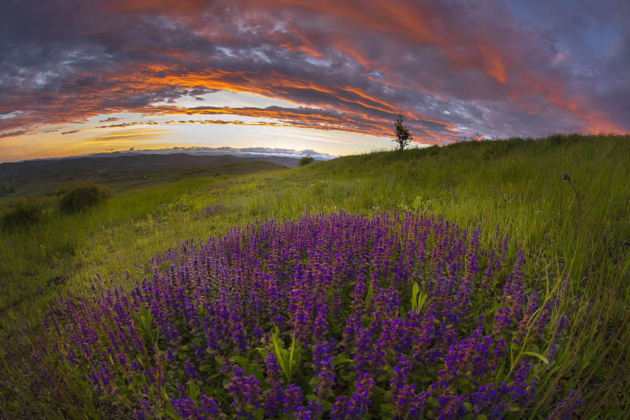 Lavender Photograph - Sunset With Lavender by Ovidiu Caragea