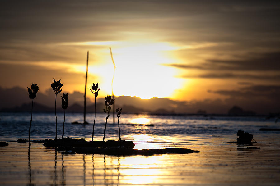 Sunset Photograph - Sunset by Zestgolf