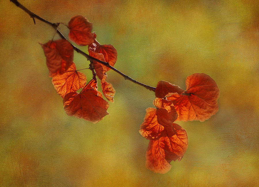 Tree Photograph - Sunshine And Red  by Ivelina G