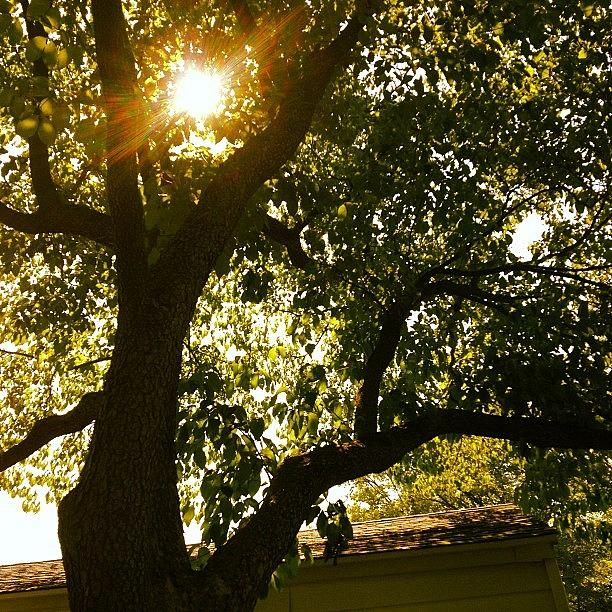 Tree Photograph - Sunshine by Christy Beckwith