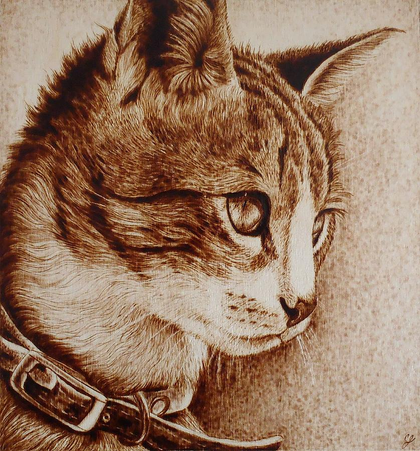Sunshine Kitten Drawing By Cara Jordan