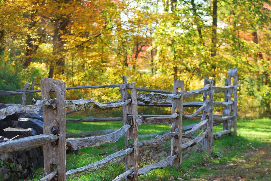Fall Photograph - Sunshine by Lorena Mahoney