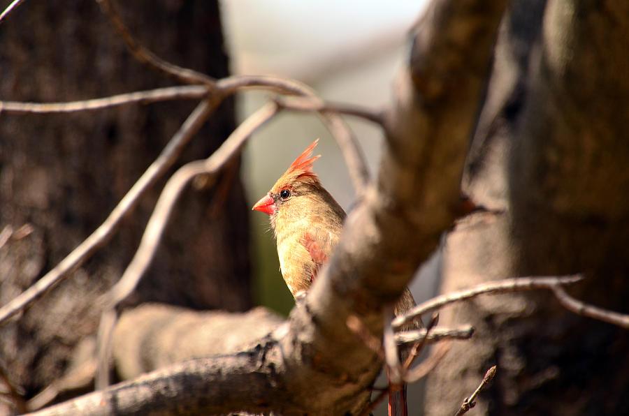 Bird Photograph - Sunshine Makes Me Happy by Lori Tambakis