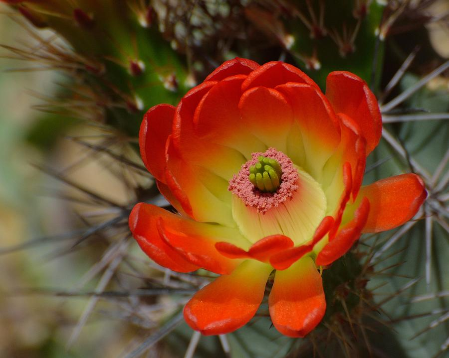 Cactus Photograph - Sunshine by Old Pueblo Photography