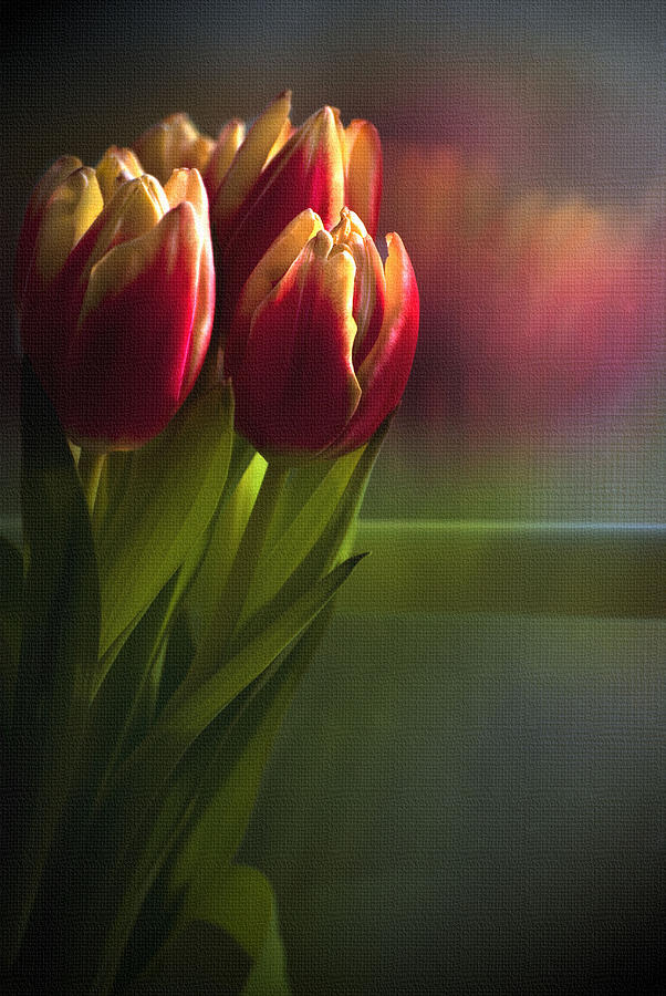 Tulips Photograph - Sunshine On My Window by Cindy Rubin
