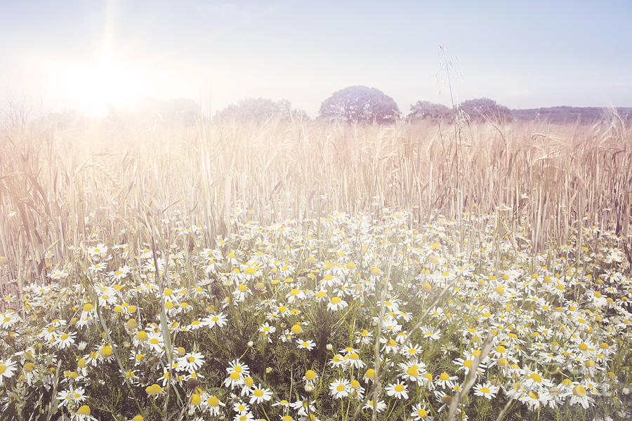 Sun Photograph - Sunshine Over The Fields by Natalie Kinnear