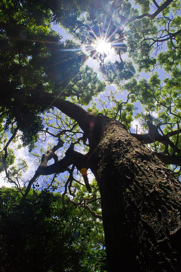 Sun Photograph - Sunshine Through The Trees by Matt Radcliffe
